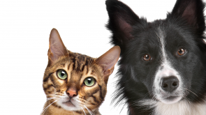 Property pets cat dog